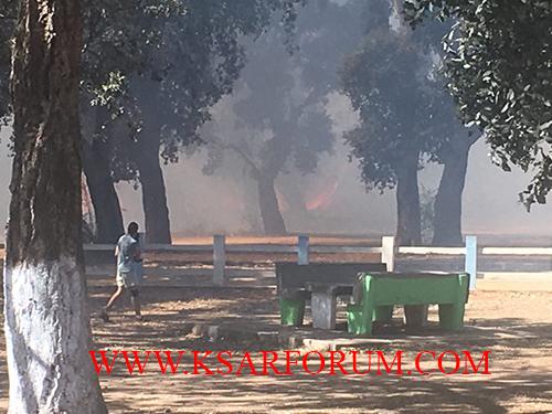 العرائش : حريق بغابة الأوسطال