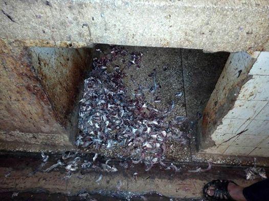 حماية المستهلك بمدينة القصر الكبير اللحوم الحمراء و السمك نموذجا .