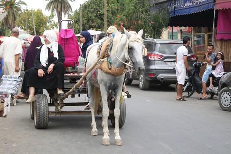 ماذا بعد قرار منع دخول العربات المجرورة بالحصان للقصر الكبير ؟؟؟؟