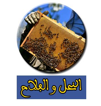 النحل و الفلاح