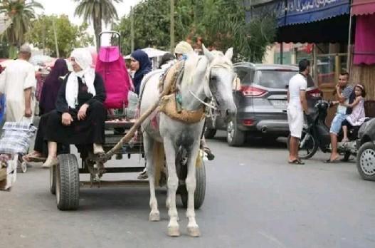 العربات المجرورة أو حليمة تعود لعادتها القديمة