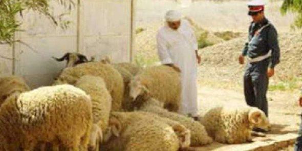 درك القصر الكبير يلقي القبض على عصابة من ابن احمد تمتهن سرقة الأغنام