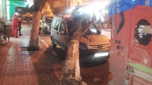 شاحنة تقتلع شجرة , وتكسر الواجهة الزجاجية لسيارة !!