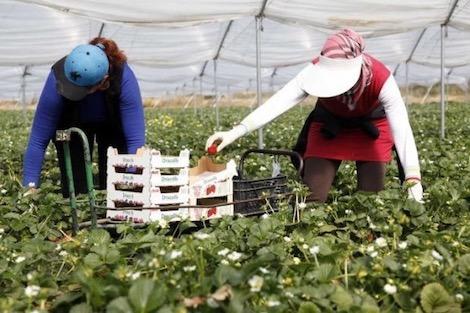 حقوقي يحذر من تنقل عاملات بين وزان والعرائش